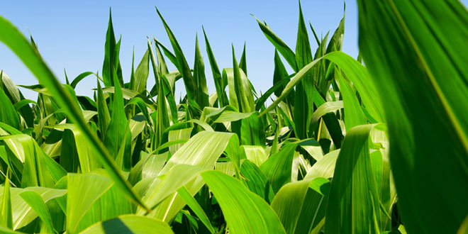 Biofuels damaging to the environment says bbc naturalist