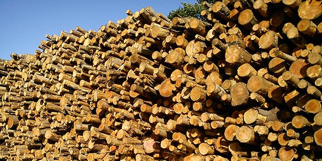 woodsureweb