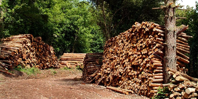 Popular - Britain's trees under threat from bugs and diseases in imported firewood logs