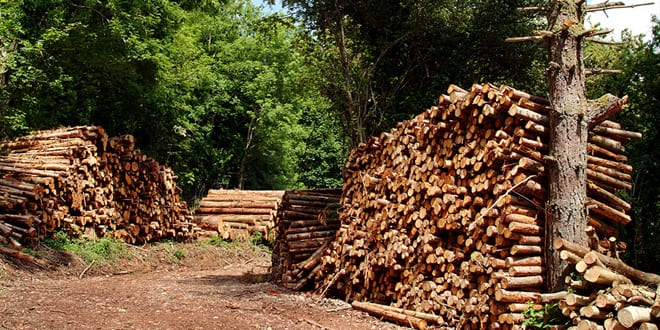 Popular - The critical issue of the quality of woodfuel, is often overlooked