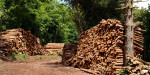 The critical issue of the quality of woodfuel, is often overlooked