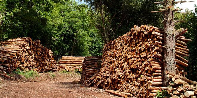 woodsure new