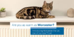 "Worcester launches new ""Worcester the cat"" consumer advertising campaign"